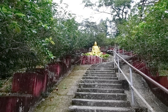 Sha Tin - Ten Thousand Buddhas Monastery 萬佛寺_4