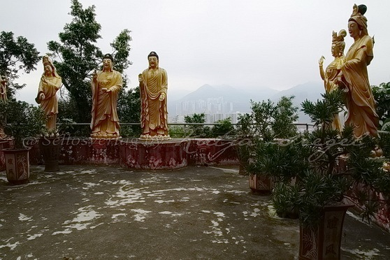 Sha Tin - Ten Thousand Buddhas Monastery 萬佛寺_8