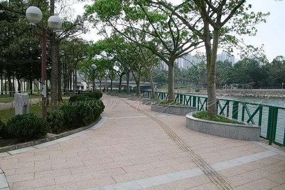 Tai Po - Tai Po River 大埔河_4