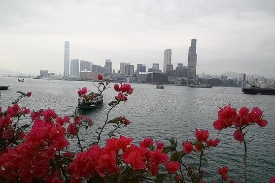 Wan Chai Ferry Pier灣仔渡輪碼頭_3