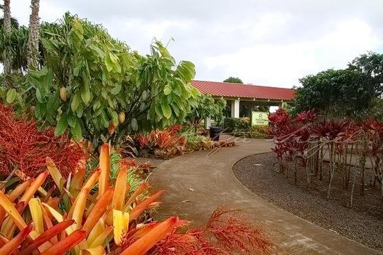 Dole_Ananas_Farm_3