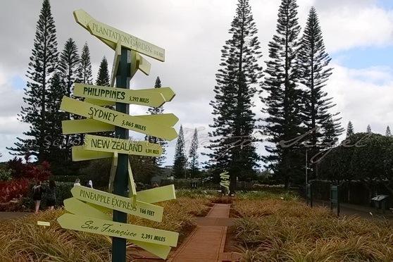 Dole_Ananas_Farm_signpost_2