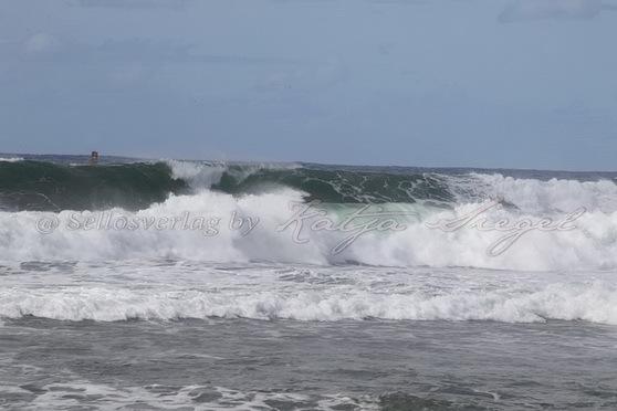 Haleʻiwa-Aliʻi-Beach-Park_3