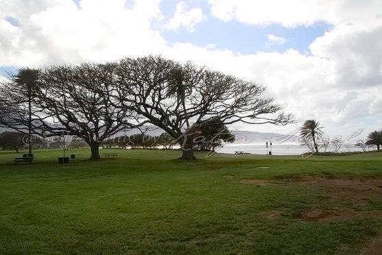 Haleʻiwa-Aliʻi-Beach-Park_4