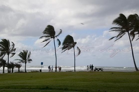 Haleʻiwa-Aliʻi-Beach-Park_5