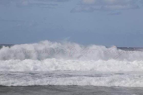 Haleʻiwa-Aliʻi-Beach-Park_6