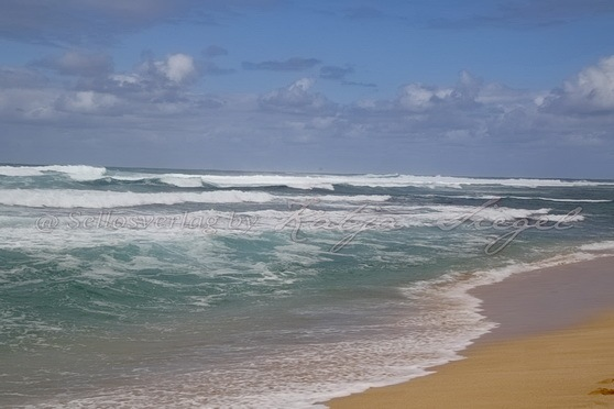 Sunset-Beach-Crooked-Palm-Tree_1