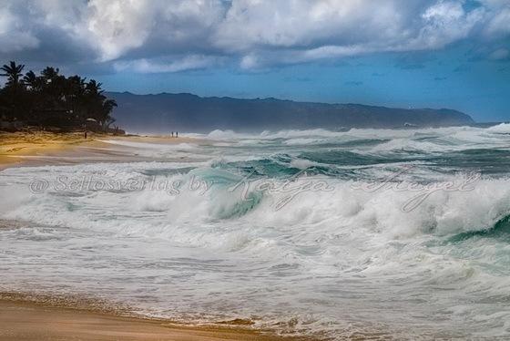 Sunset-Beach-Crooked-Palm-Tree_2