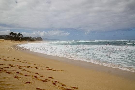 Sunset-Beach-Crooked-Palm-Tree_5