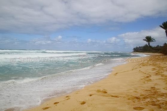 Sunset-Beach-Crooked-Palm-Tree_6
