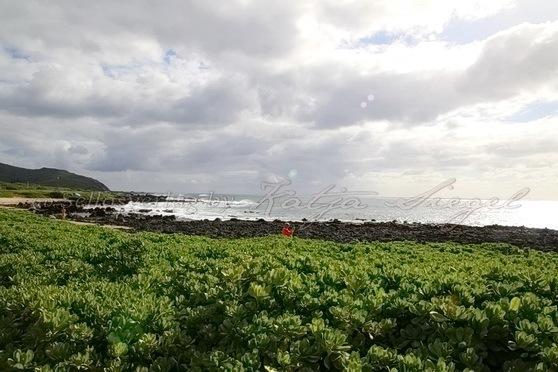 Wawamalu-Beach-Park_2